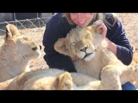 Africa Adventures – Volunteering at Cheetah Experience