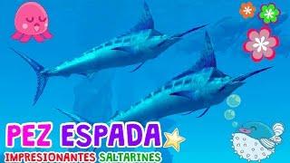 PEZ ESPADA, IMPRESIONANTES SALTARINES