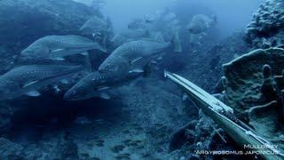 Spearfishing - Mulloway Misadventures 5