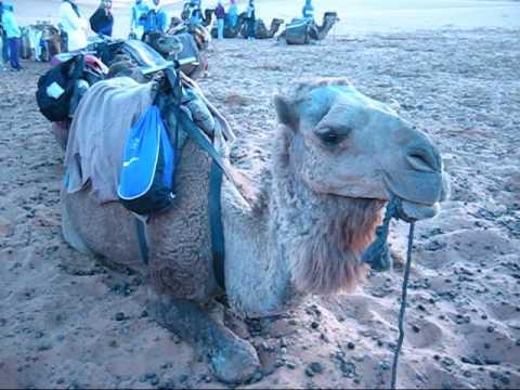Michelle Rides a Camel