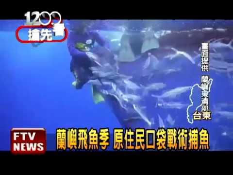 蘭嶼飛魚季 捕捉過程全記錄-民視新聞 - YouTube