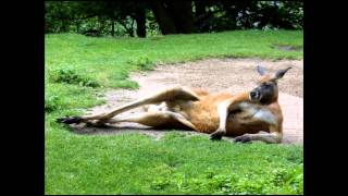 Fešáci - Do austrálie