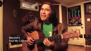 Blackbird...one of my favorite songs from Paul McCartney