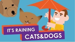 Why do we say: It's Raining Cats and Dogs?