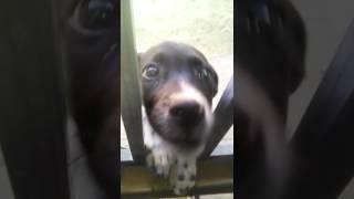 Vídeo do cachorrinho