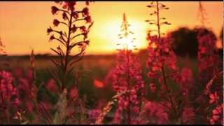 Relaxing Music - Piano Music with Beautiful Flowers