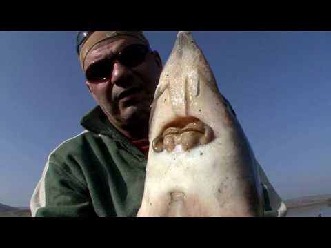 Pescuit și recoltare de pești