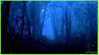 efeito sonoro, ambiente, natureza a noite - sound effect, environment, nature night -  効果音、環境、自然の夜