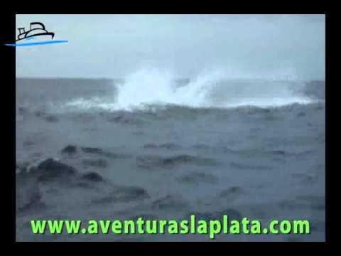 Observacion de Ballenas en Puerto Lopez. Aventuras La Plata Operador Turistico