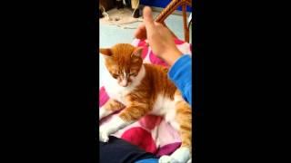 Pushka cat