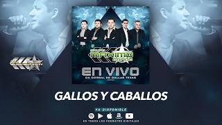 Gallos y Caballos - Maximo Grado (En Vivo Ok Corral De Dallas Texas) MG Corporation