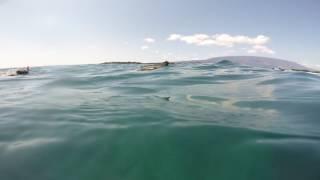 Aquatic Iguana in Galápagos
