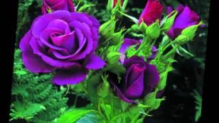 los yonics rosas blancas by Maritto Mariosso