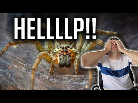 RAID | SPIDER 19!! ITS SO HARD! ACCOUNT TAKEOVER!