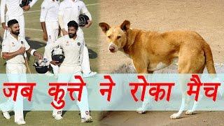 India vs England: Dog interrupt live match | वनइंडिया हिंदी