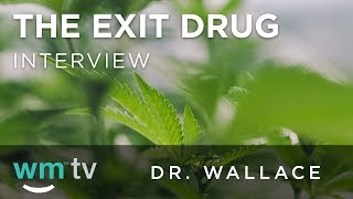 How Cannabis Is Successful in Opioid Addiction Recovery | The Exit Drug