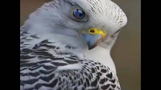 Beautiful birds video song