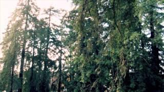 Wedding Song (Acoustic) - Yeah Yeah Yeahs