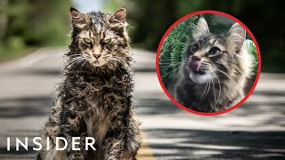 How Cats Are Trained For TV And Movies   Movies Insider