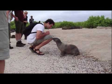 Cheeky little Sea Lion keen on making friends – Galapagos Islands Ecuador
