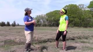 #OceanRunnerNH: Salt Marsh Ecology 101