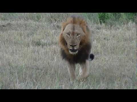 SA 2012 – Lions