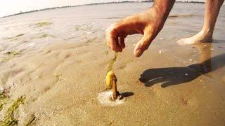 Fui colocar sal na areia da praia, e olha no que deu!!