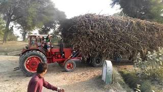 2 MTZ 50 tractor stunt with heavy loaded sugarcane Trala( this season first video)
