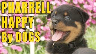 Pharrell - Happy (Puppy & Doggy Version)