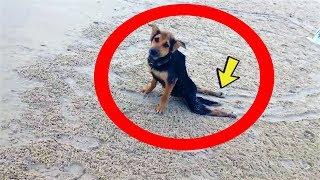 Hund kriecht tagelang herum, weil ihn keiner will! Jahre später ist alles anders!