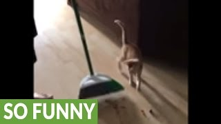 """Kitten just wants to """"help"""" clean the house"""