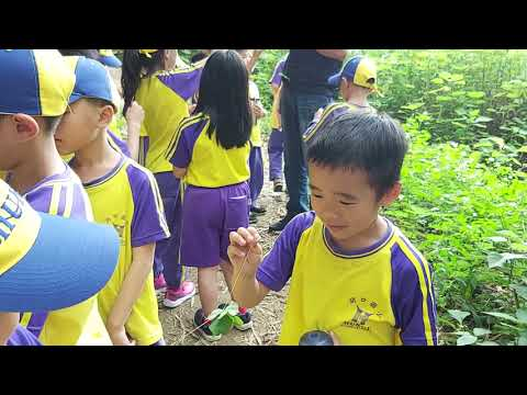 尋找酢漿草遊戲影片 - YouTube