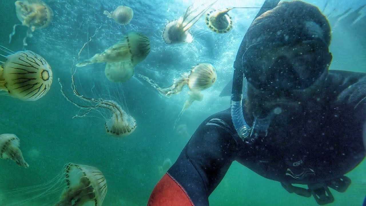 Swimming with 10,000 Stinging Jellyfish | Rare Super-Bloom in Donegal, Ireland