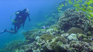 Underwater Restaurant & Reef Conservation - Indian Ocean with Simon Reeve - BBC