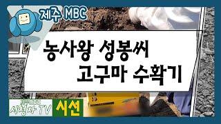 시청자TV 시선 7회 [농사왕 성봉씨 고구마 수확기 편] 다시보기