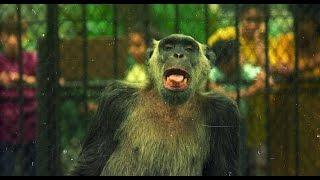 Macaco Tião do Rio de Janeiro, 20 anos da morte do candidato, popular macaco foi eleito varias vezes