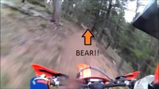 BEAR spotting in Rampart Range Colorado HD