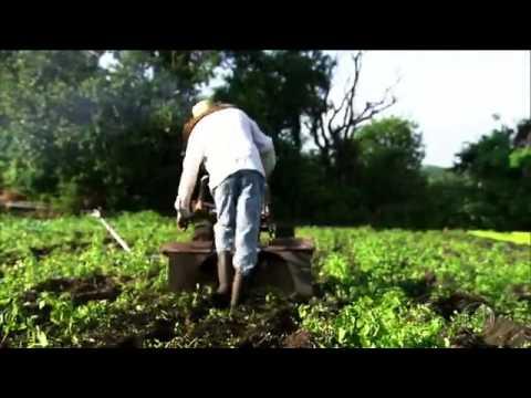 TV Stilo - Agro Indústria