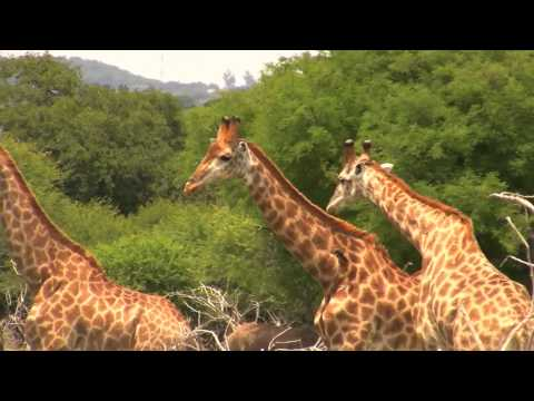 Thanda Nani Game Lodge & Private Game Reserve, South Africa – GoHop.ie – Unravel Travel TV