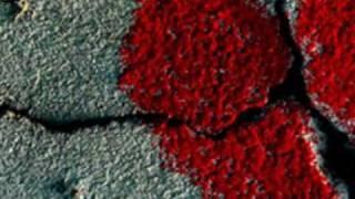 Mal de amor - Gustavo Lima