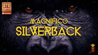 Magnifico - Silverback [Otodayo Records]