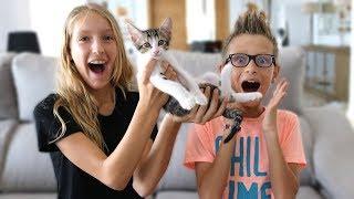 Meet Our New Kitten!!!!!