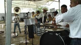 Tamborazo Banda Los Viejitos