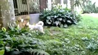 cachorrinho brincando de esconde esconde com o sapo