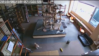 Cats Predict Earthquake Before It Hits