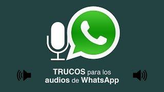 Amor, Seguís Trotando? | Audios de WhatsApp width=