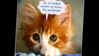 Los Claveles De La Cumbia - Perdoname ( ★PRIMICIA 2016 ★)