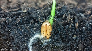 I Could Watch Time Lapses Of Seeds Growing All Day
