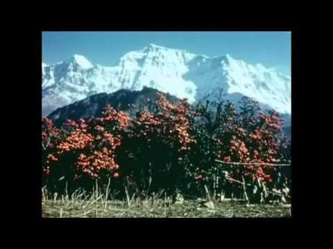 Nepal in 1950 A.D