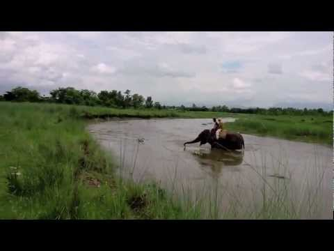 Biondi su un'elefantessa a Chitwan